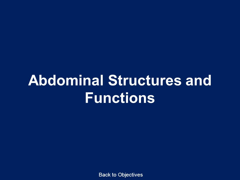 Abdominal Structures and Functions Back to Objectives