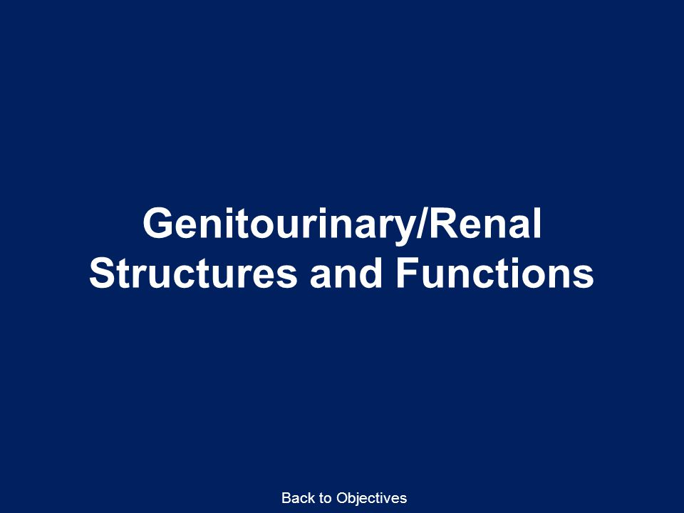 Genitourinary/Renal Structures and Functions Back to Objectives