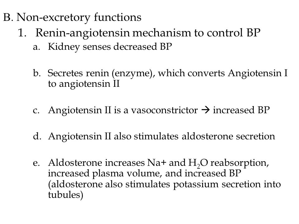 B. Non-excretory functions 1.Renin-angiotensin mechanism to control BP a.Kidney senses decreased BP b.Secretes renin (enzyme), which converts Angioten