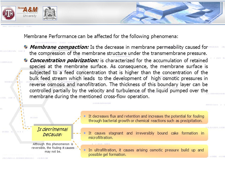 A&MA&M University Texas Membrane Performance can be affected for the following phenomena: Membrane compaction: Is the decrease in membrane permeabilit