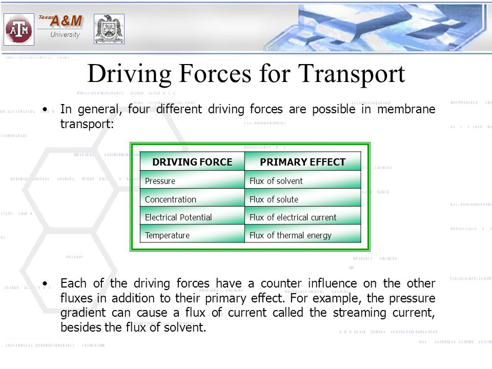 A&MA&M University Texas Driving Forces for Transport In general, four different driving forces are possible in membrane transport: Each of the driving