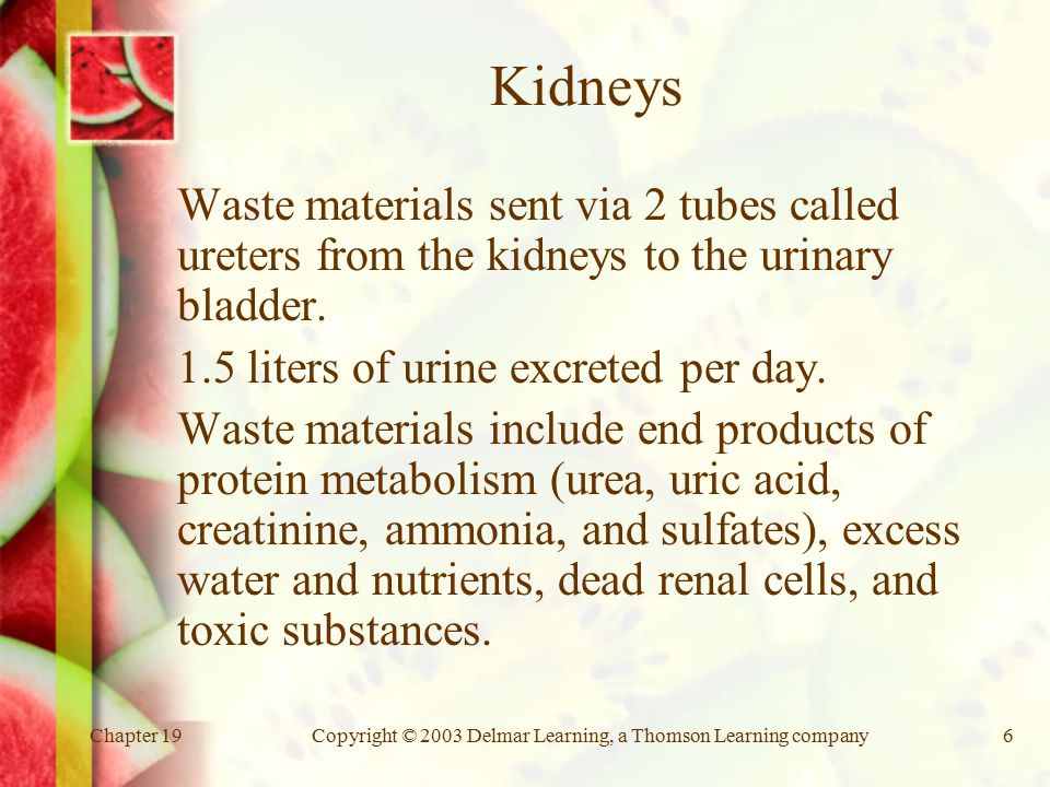 Chapter 19Copyright © 2003 Delmar Learning, a Thomson Learning company6 Kidneys Waste materials sent via 2 tubes called ureters from the kidneys to the urinary bladder.