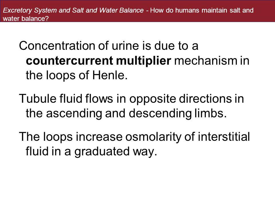 Concentration of urine is due to a countercurrent multiplier mechanism in the loops of Henle.