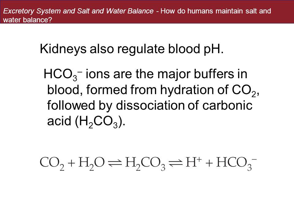 Kidneys also regulate blood pH.