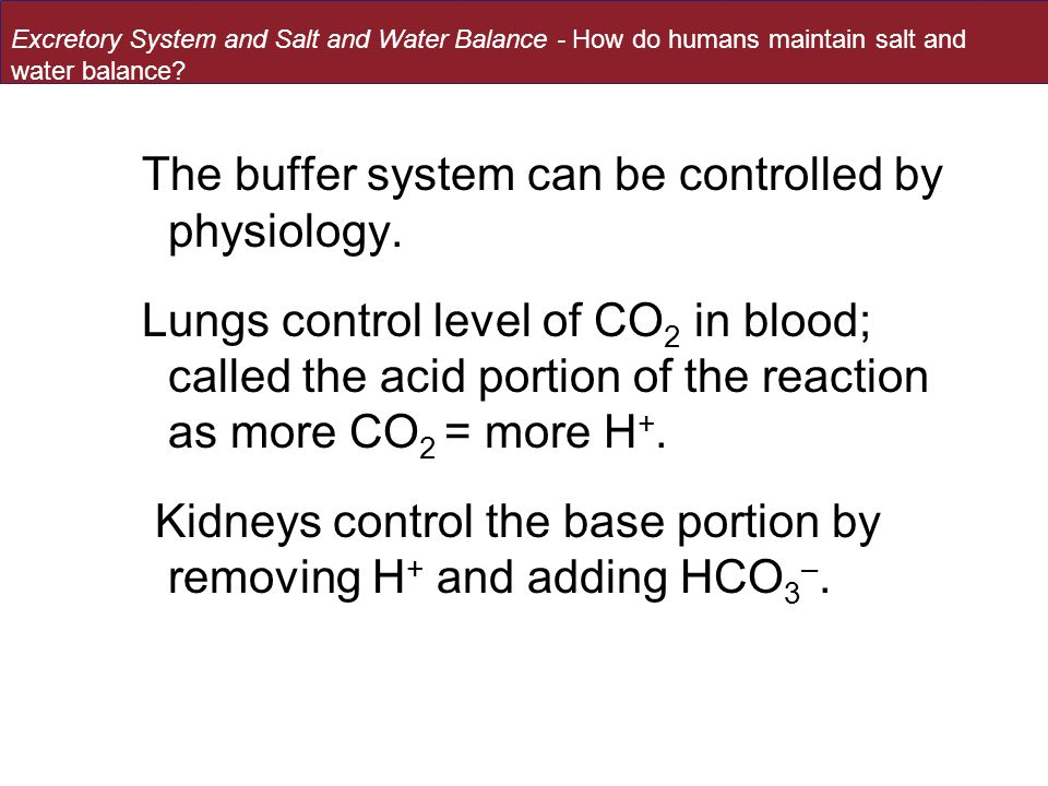 The buffer system can be controlled by physiology.