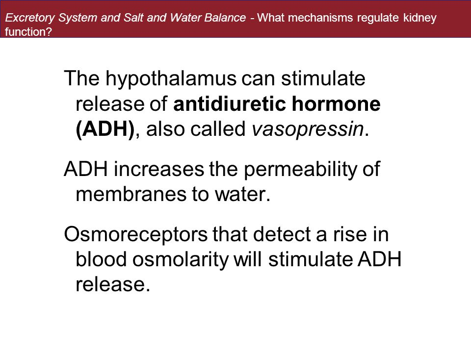 The hypothalamus can stimulate release of antidiuretic hormone (ADH), also called vasopressin. ADH increases the permeability of membranes to water. O