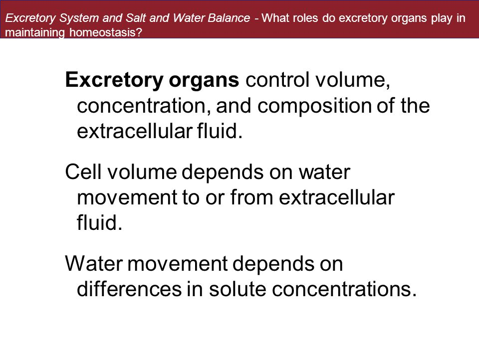 Excretory organs control volume, concentration, and composition of the extracellular fluid.
