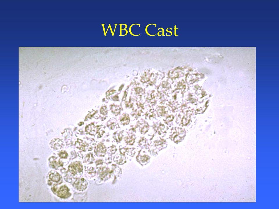 WBC Cast
