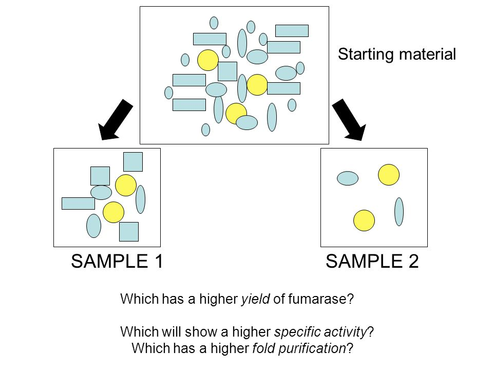 SAMPLE 1SAMPLE 2 Which has a higher yield of fumarase.