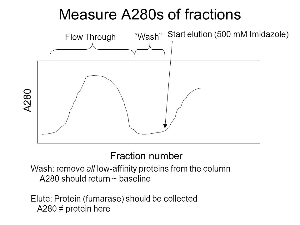Measure A280s of fractions A280 Fraction number Flow Through Wash Start elution (500 mM Imidazole) Wash: remove all low-affinity proteins from the column A280 should return ~ baseline Elute: Protein (fumarase) should be collected A280 ≠ protein here