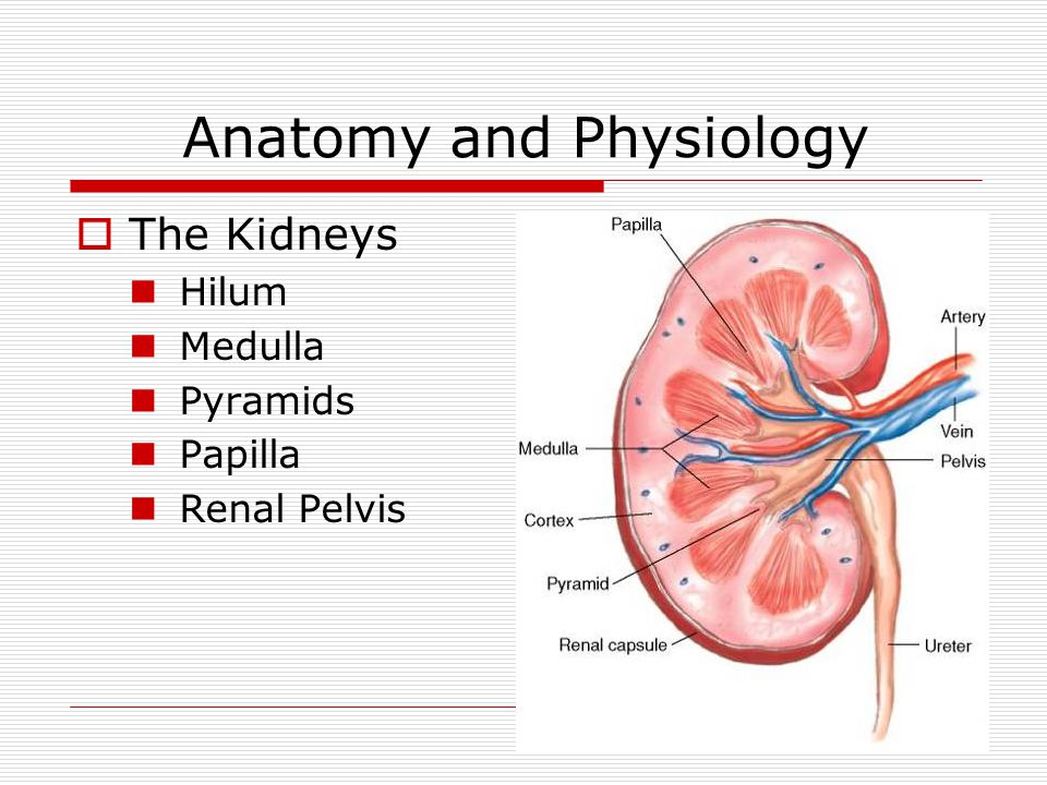 Objectives  Anatomy  Function  Chronic Renal Failure (CRF) Causes Symptoms  Dialysis