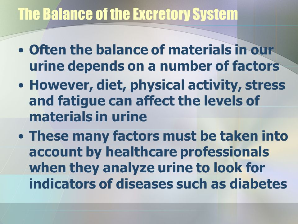 The Balance of the Excretory System Often the balance of materials in our urine depends on a number of factors However, diet, physical activity, stres