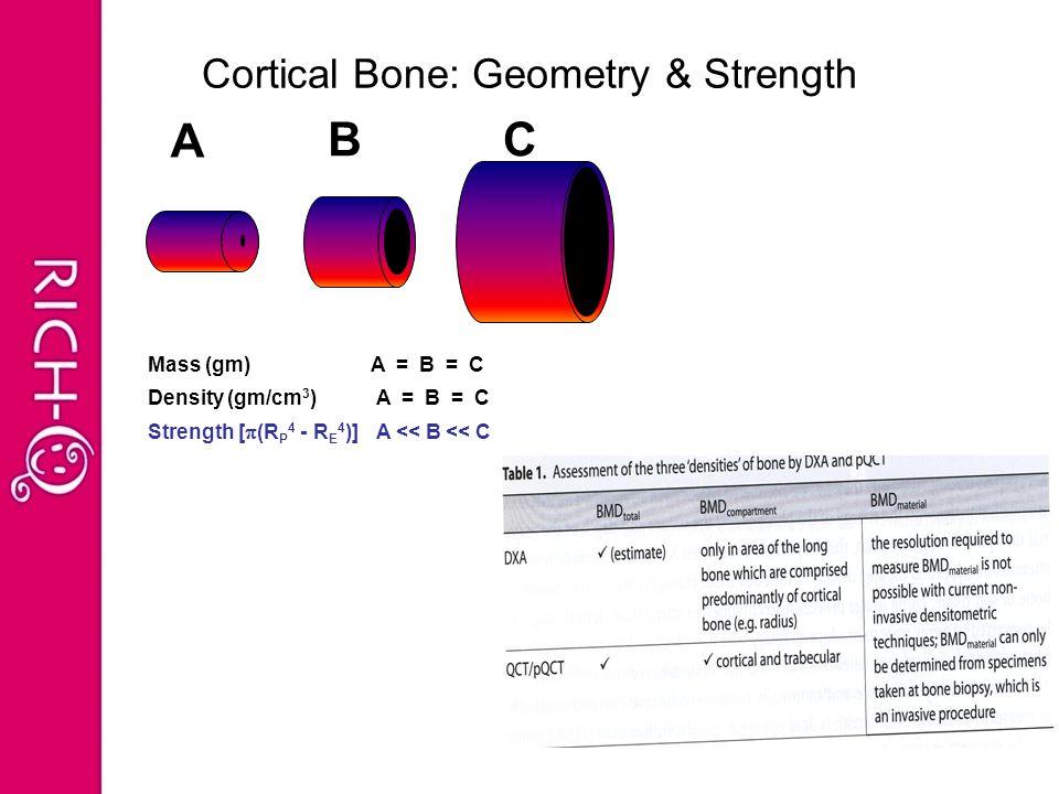 A BC Mass (gm) A = B = C Density (gm/cm 3 ) A = B = C Strength [  (R P 4 - R E 4 )] A << B << C Cortical Bone: Geometry & Strength
