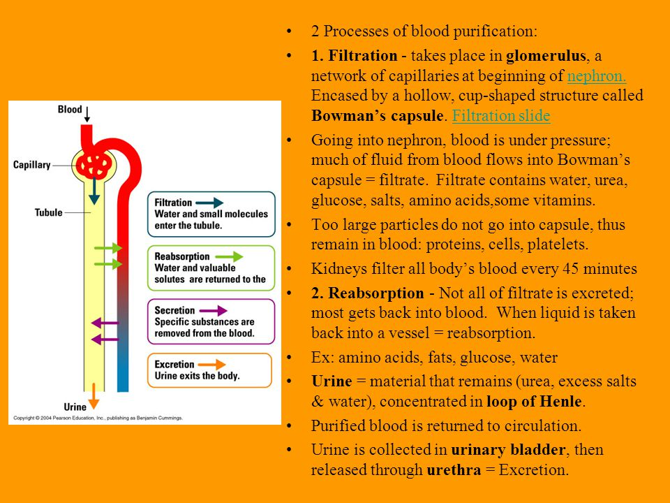 2 Processes of blood purification: 1.