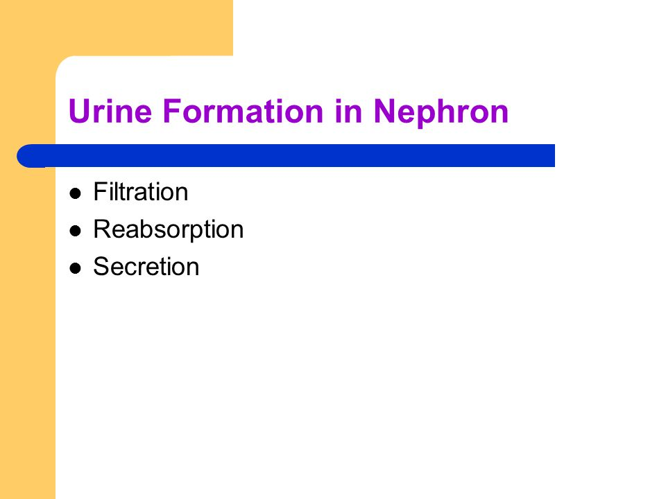Urine Formation in Nephron Filtration Reabsorption Secretion