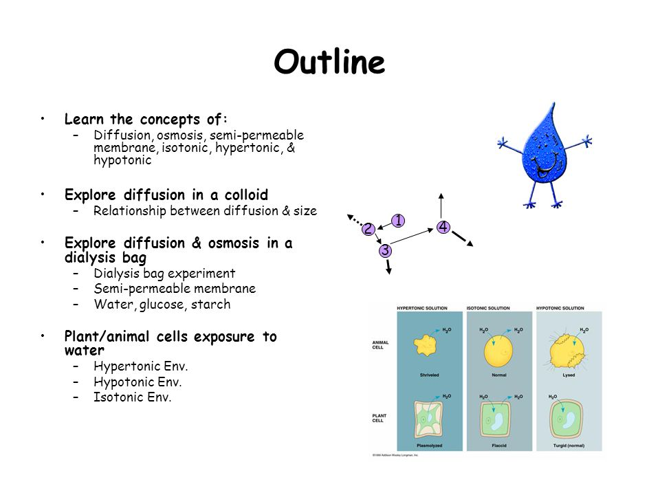 Outline Learn the concepts of: –Diffusion, osmosis, semi-permeable membrane, isotonic, hypertonic, & hypotonic Explore diffusion in a colloid –Relationship between diffusion & size Explore diffusion & osmosis in a dialysis bag –Dialysis bag experiment –Semi-permeable membrane –Water, glucose, starch Plant/animal cells exposure to water –Hypertonic Env.