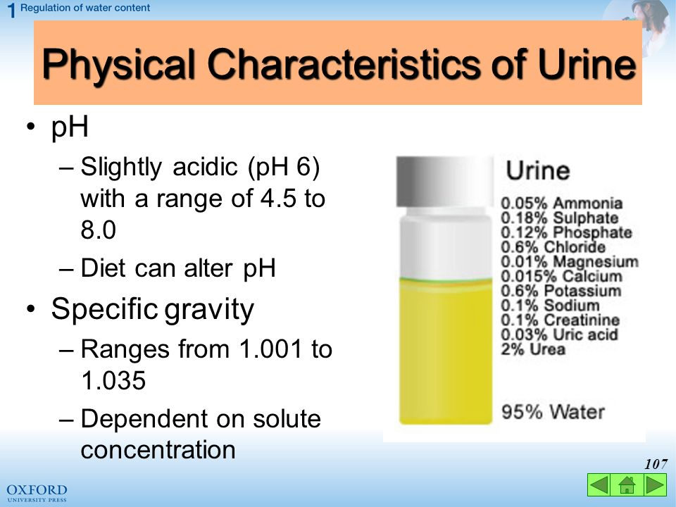 106 Physical Characteristics of Urine Odor / smell –Fresh urine is slightly aromatic –Standing urine develops an ammonia odor –Some drugs and vegetabl