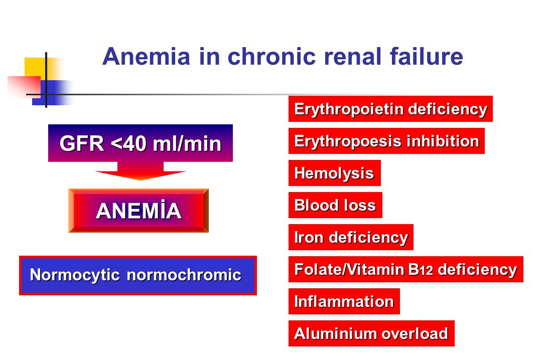 Anemia in chronic renal failure GFR <40 ml/min ANEMİA Normocytic normochromic Normocytic normochromic Erythropoietin deficiency Iron deficiency Folate