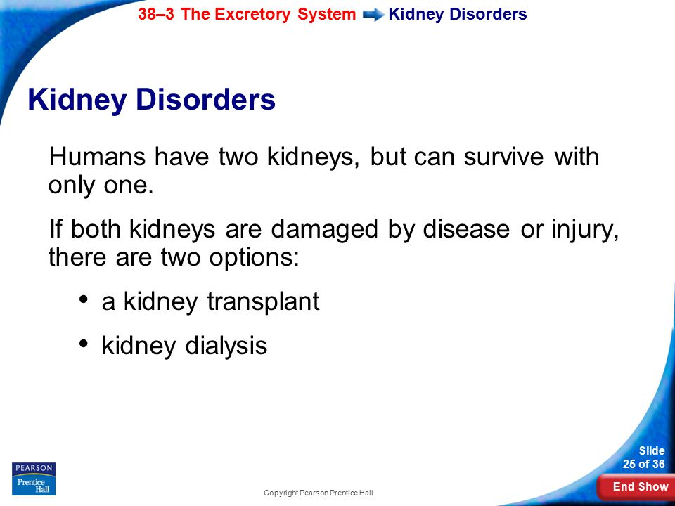 End Show 38–3 The Excretory System Slide 25 of 36 Copyright Pearson Prentice Hall Kidney Disorders Humans have two kidneys, but can survive with only