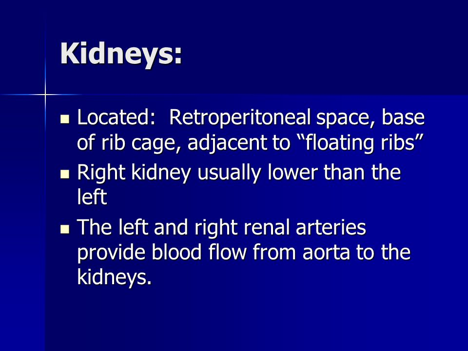 Kidneys: Located: Retroperitoneal space, base of rib cage, adjacent to floating ribs Located: Retroperitoneal space, base of rib cage, adjacent to floating ribs Right kidney usually lower than the left Right kidney usually lower than the left The left and right renal arteries provide blood flow from aorta to the kidneys.