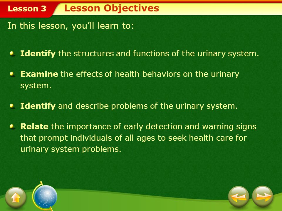 Lesson 3 How can you ensure a healthy urinary system? The Urinary System Include healthful sources of fluids to help maintain the function of your uri
