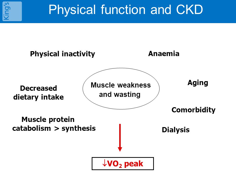 Muscle weakness and wasting Decreased dietary intake Physical inactivity Muscle protein catabolism > synthesis Physical function and CKD Aging Comorbi