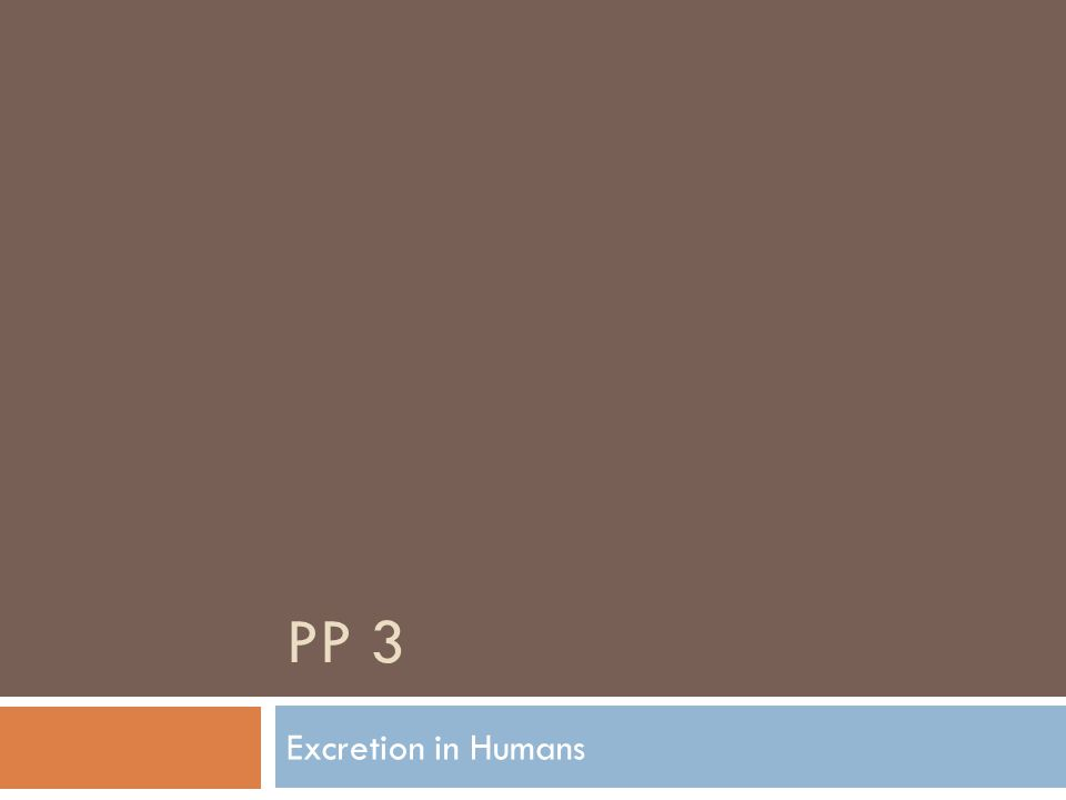 PP 3 Excretion in Humans