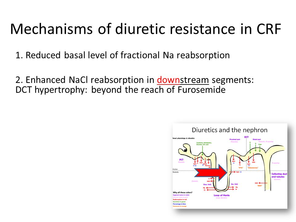 Mechanisms of diuretic resistance in CRF 1.Reduced basal level of fractional Na reabsorption 2.