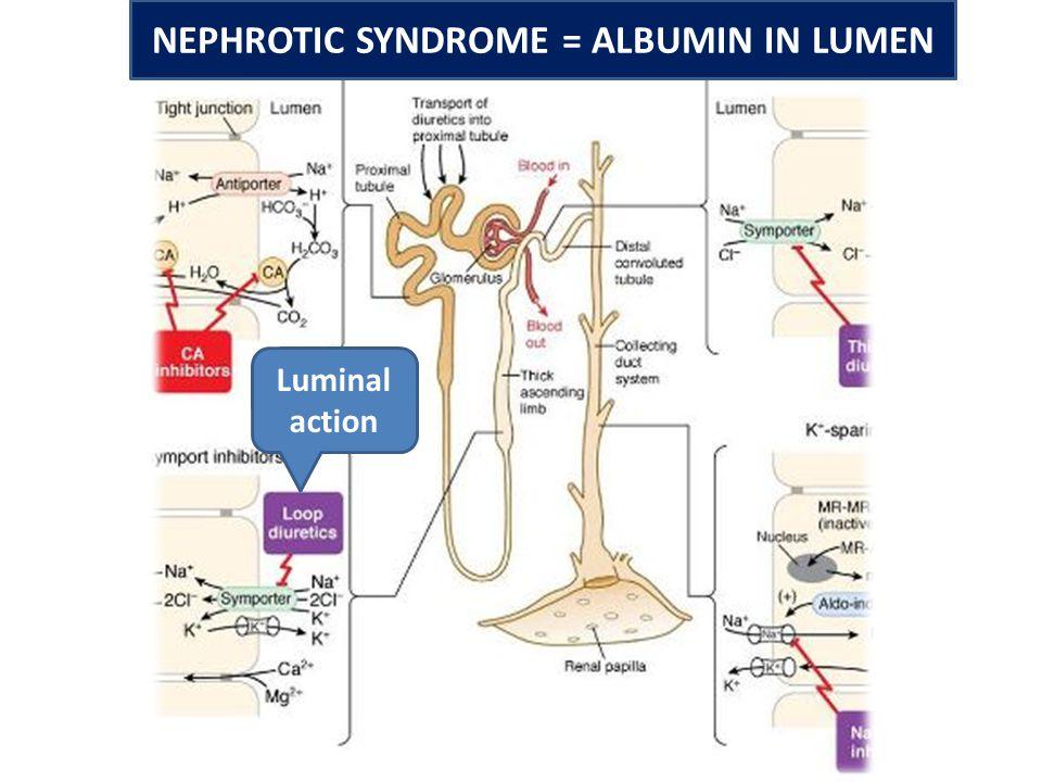Luminal action NEPHROTIC SYNDROME = ALBUMIN IN LUMEN