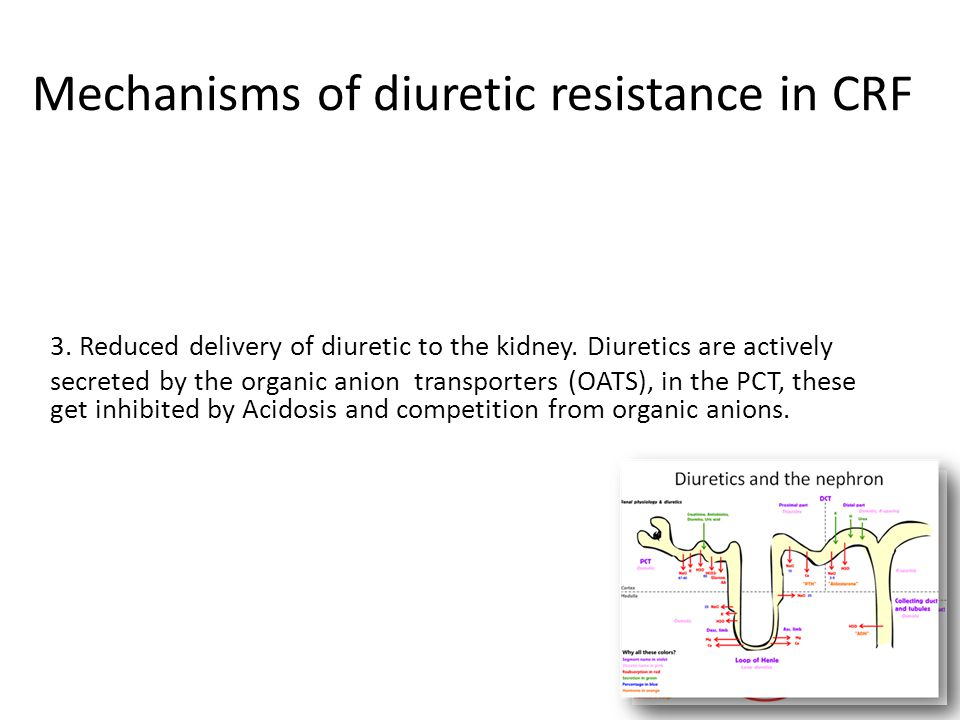 Mechanisms of diuretic resistance in CRF 1. Reduced basal level of fractional Na reabsorption 2. Enhanced NaCl reabsorption in downstream segments: DC