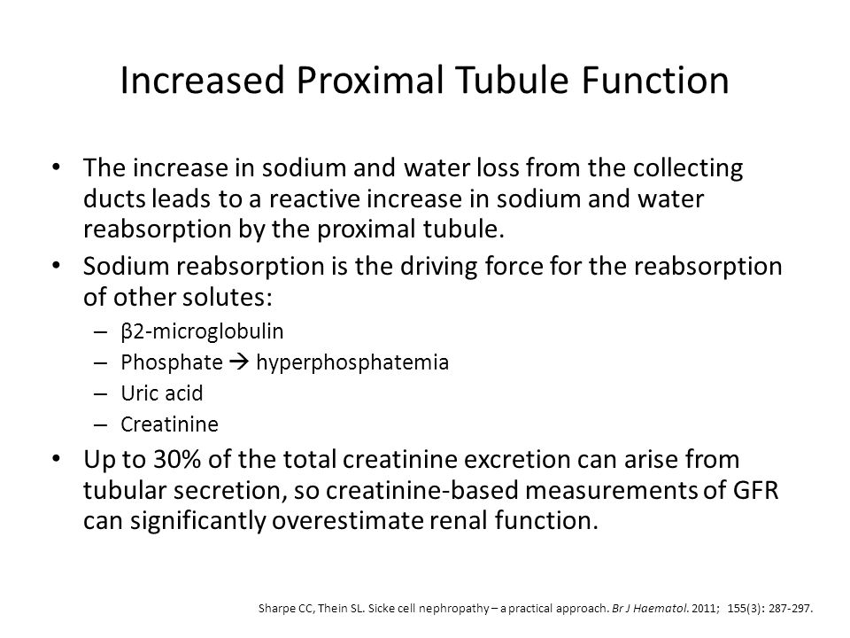 Increased Proximal Tubule Function The increase in sodium and water loss from the collecting ducts leads to a reactive increase in sodium and water re