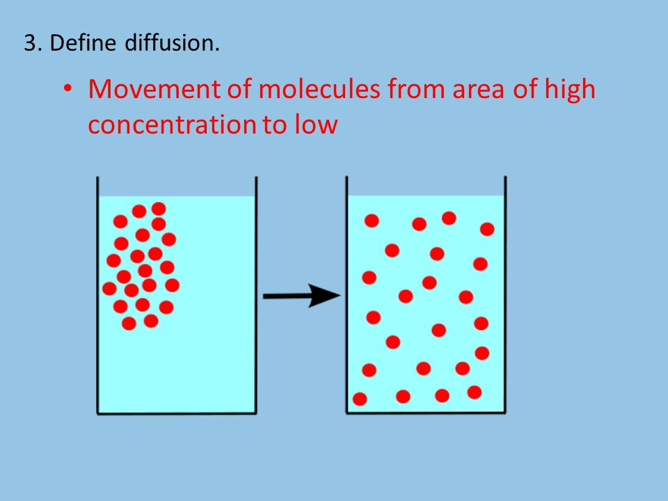3. Define diffusion. Movement of molecules from area of high concentration to low