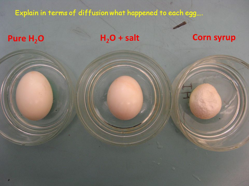 Pure H 2 O H 2 O + salt Corn syrup Explain in terms of diffusion what happened to each egg….