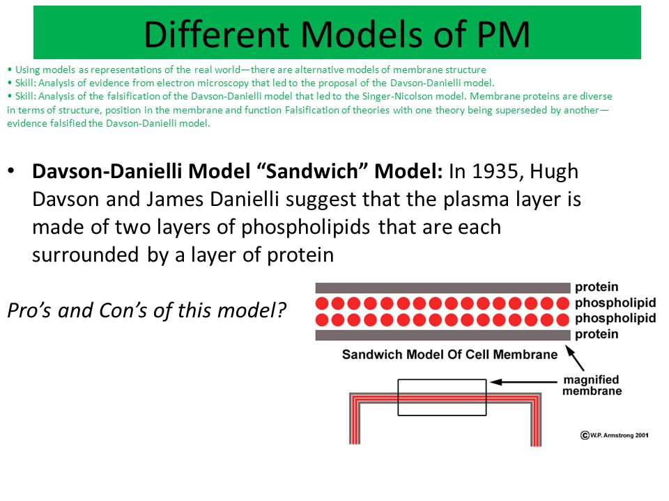 Different Models of PM Using models as representations of the real world—there are alternative models of membrane structure Skill: Analysis of evidenc
