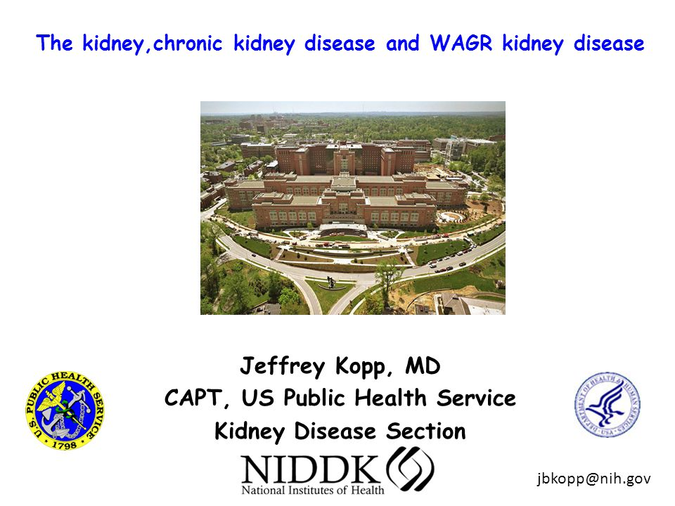 The kidney,chronic kidney disease and WAGR kidney disease Jeffrey Kopp, MD CAPT, US Public Health Service Kidney Disease Section jbkopp@nih.gov