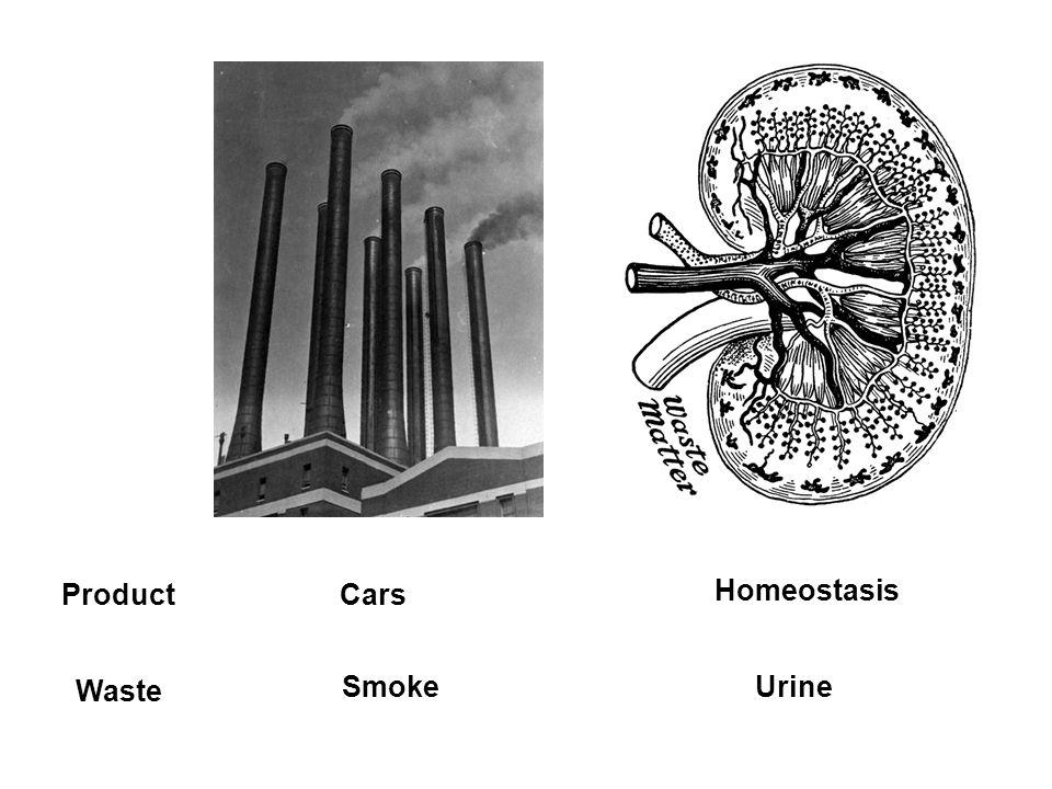 Product Waste Cars Smoke Homeostasis Urine