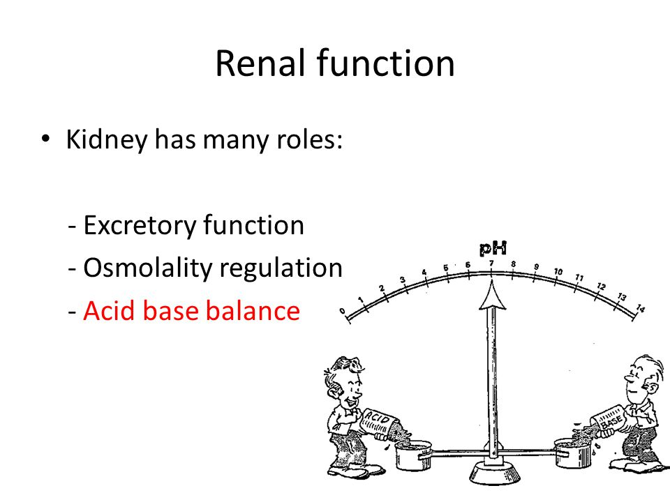 Renal function Kidney has many roles: - Excretory function - Osmolality regulation - Acid base balance - BP regulation through salt and water balance