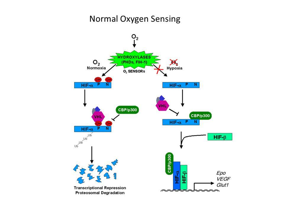Normal Oxygen Sensing