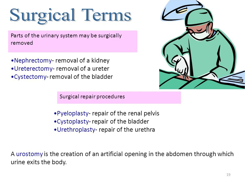 18 Pathological Terms Terms Used to Describe Difficulties in Urination anuresis No urinary output dysuria Painful urination enuresis Lack of bladder c