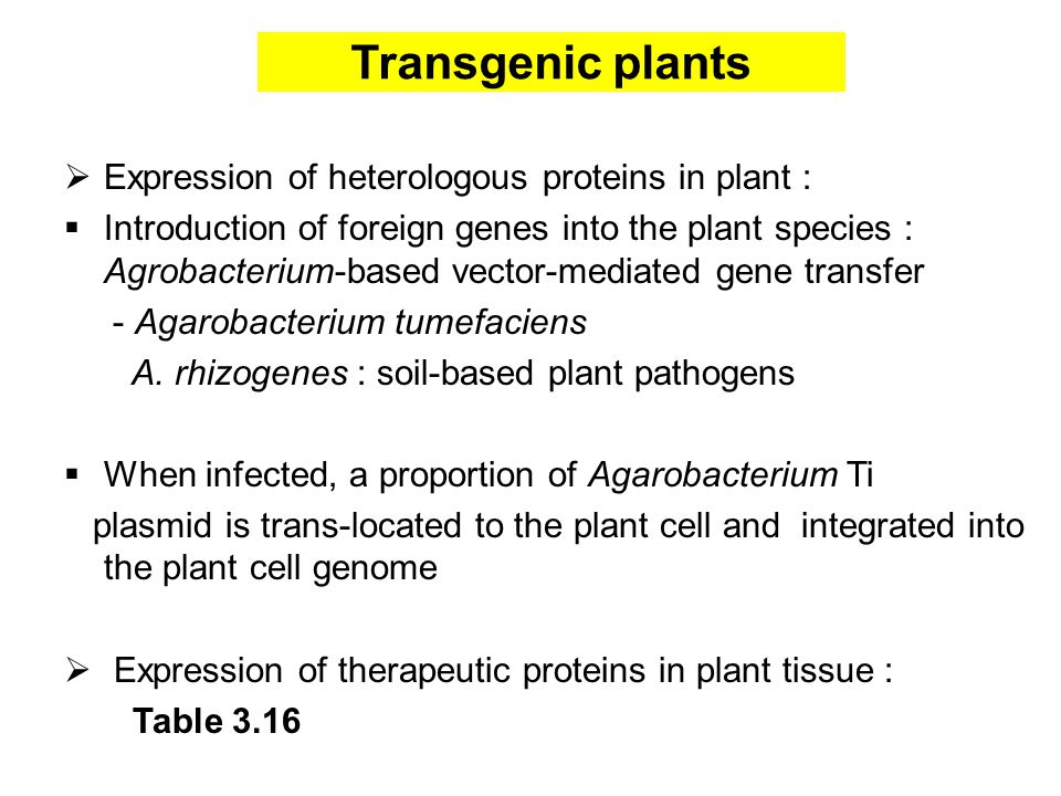 Transgenic plants  Expression of heterologous proteins in plant :  Introduction of foreign genes into the plant species : Agrobacterium-based vector-mediated gene transfer - Agarobacterium tumefaciens A.