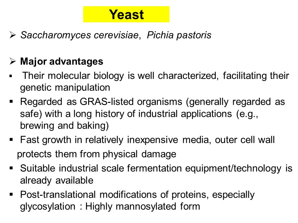 Yeast  Saccharomyces cerevisiae, Pichia pastoris  Major advantages  Their molecular biology is well characterized, facilitating their genetic manipulation  Regarded as GRAS-listed organisms (generally regarded as safe) with a long history of industrial applications (e.g., brewing and baking)  Fast growth in relatively inexpensive media, outer cell wall protects them from physical damage  Suitable industrial scale fermentation equipment/technology is already available  Post-translational modifications of proteins, especially glycosylation : Highly mannosylated form