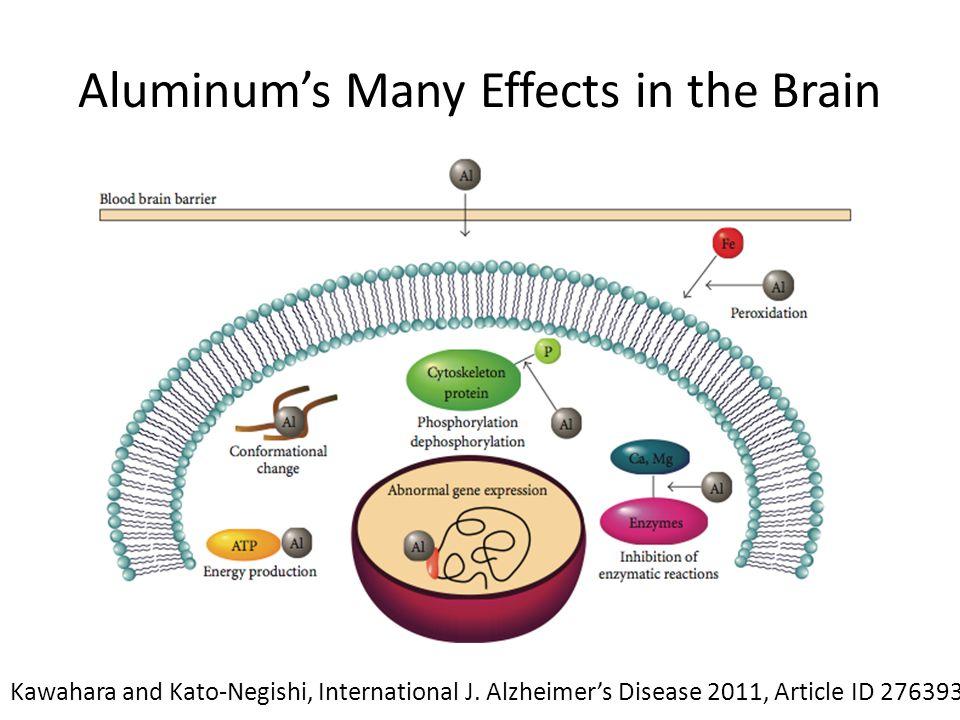 Aluminum's Many Effects in the Brain Kawahara and Kato-Negishi, International J.