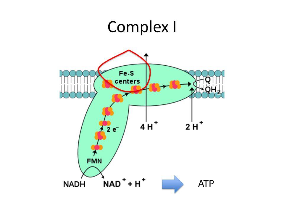 Complex I ATP