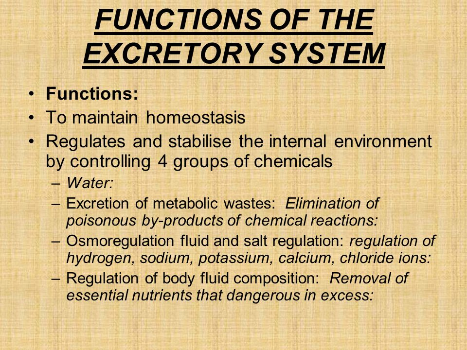 FUNCTIONS OF THE EXCRETORY SYSTEM Functions: To maintain homeostasis Regulates and stabilise the internal environment by controlling 4 groups of chemicals –Water: –Excretion of metabolic wastes: Elimination of poisonous by-products of chemical reactions: –Osmoregulation fluid and salt regulation: regulation of hydrogen, sodium, potassium, calcium, chloride ions: –Regulation of body fluid composition: Removal of essential nutrients that dangerous in excess:
