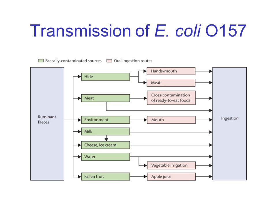 Transmission of E. coli O157