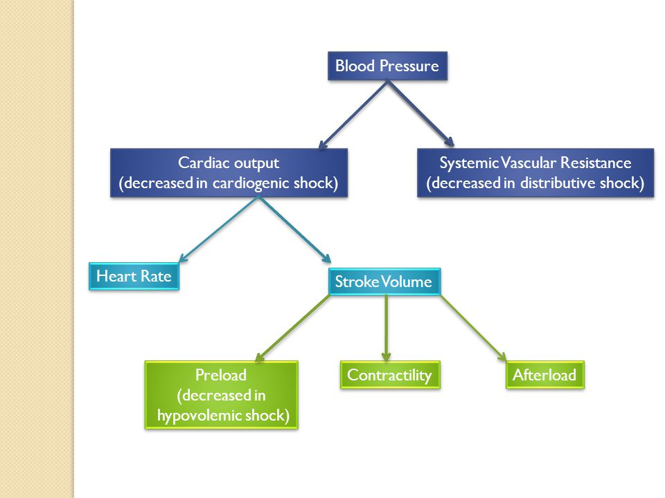 Blood Pressure Cardiac output (decreased in cardiogenic shock) Cardiac output (decreased in cardiogenic shock) Systemic Vascular Resistance (decreased in distributive shock) Systemic Vascular Resistance (decreased in distributive shock) Heart Rate Stroke Volume Preload (decreased in hypovolemic shock) Preload (decreased in hypovolemic shock) Contractility Afterload