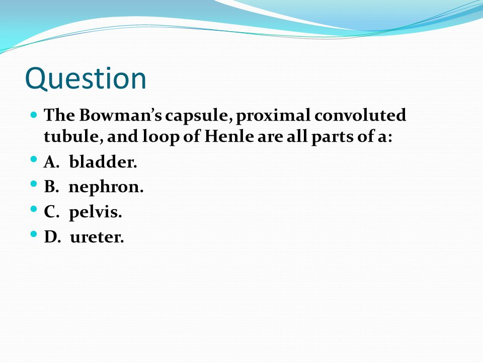 Question The Bowman's capsule, proximal convoluted tubule, and loop of Henle are all parts of a: A. bladder. B. nephron. C. pelvis. D. ureter.
