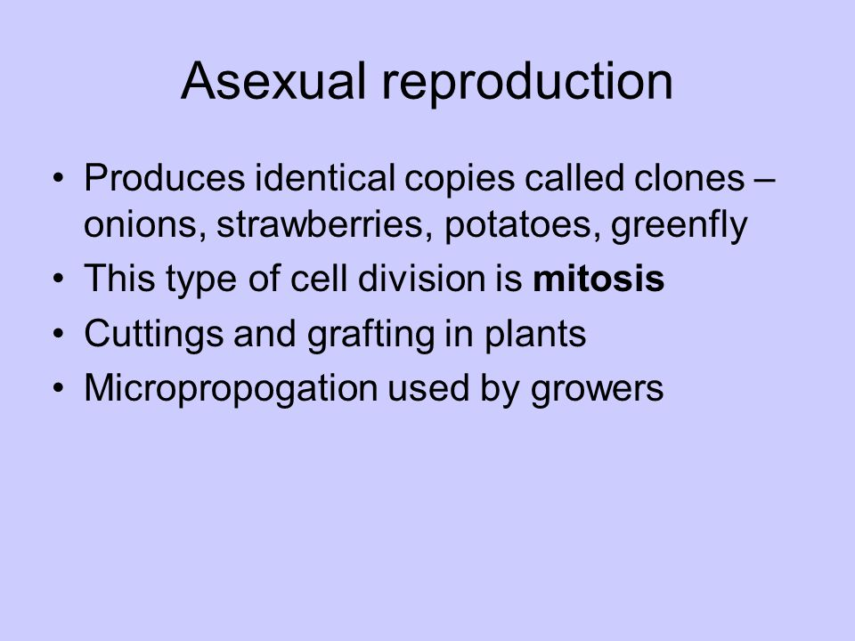 Asexual reproduction Produces identical copies called clones – onions, strawberries, potatoes, greenfly This type of cell division is mitosis Cuttings