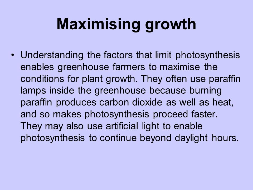 Maximising growth Understanding the factors that limit photosynthesis enables greenhouse farmers to maximise the conditions for plant growth. They oft