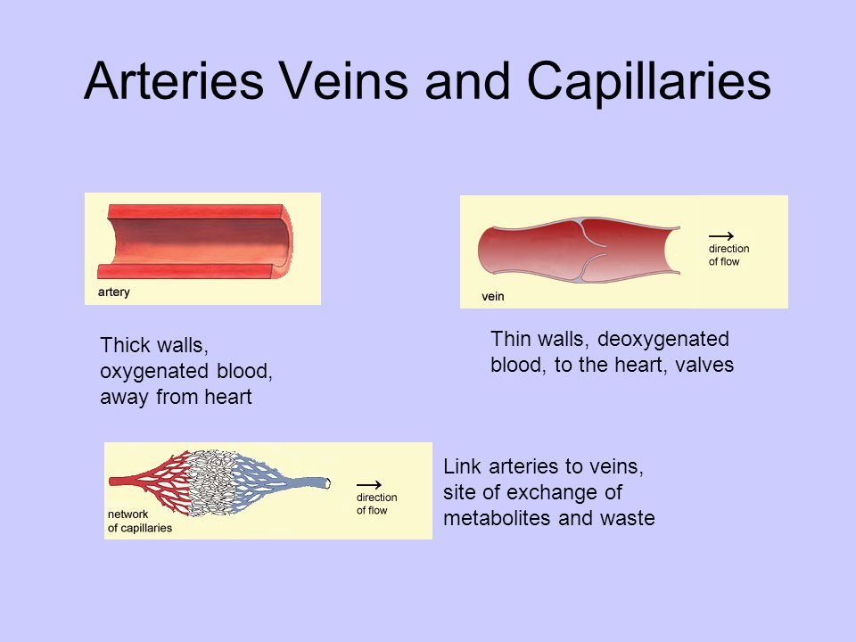 Arteries Veins and Capillaries Thick walls, oxygenated blood, away from heart Thin walls, deoxygenated blood, to the heart, valves Link arteries to ve